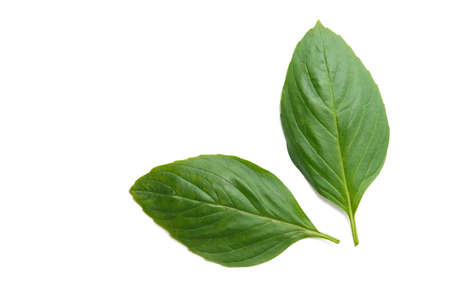 fresh basil leaf isolated on white background
