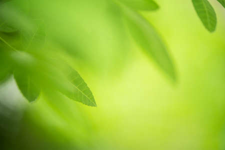 green leaf on nature greenery background in garden
