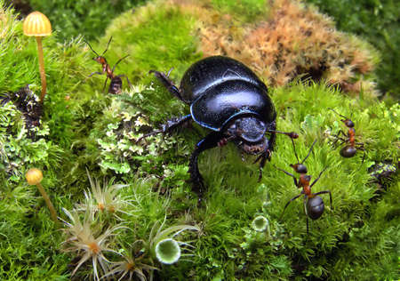 ants meet a bug