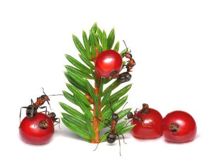 antrey: ants dressing up christmas tree Stock Photo