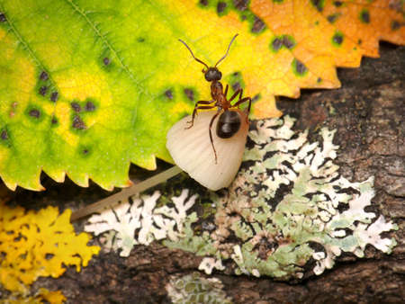 mushrooming: mushrooming, autumn troubles of ants, fantasy