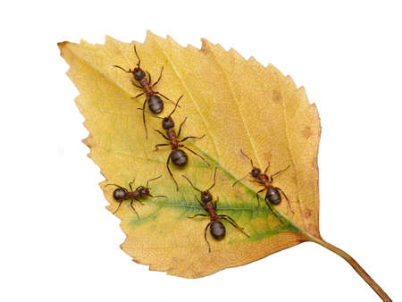 follow me, joint the team. forest ants Stock Photo - 5325753