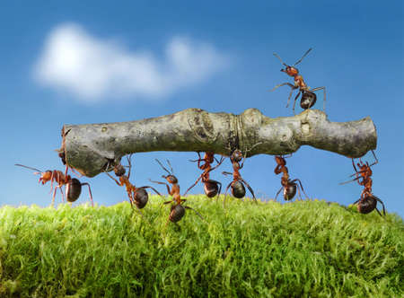 ants: ants carry log with chief on it Stock Photo