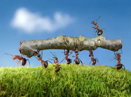 fourmis portent log avec le chef sur elle