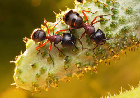 antrey: garden ants and new-born cucumber in morning light Stock Photo