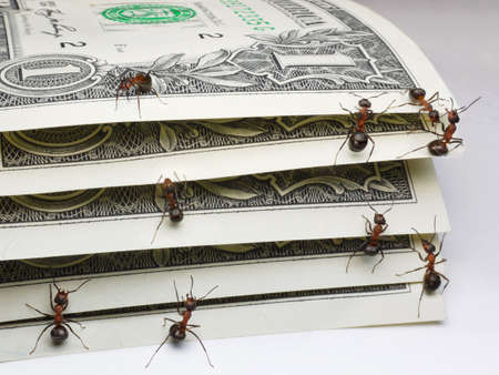 antrey: team of ants counting dollars Stock Photo