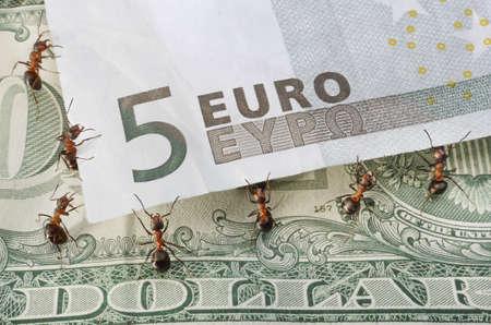 pick money: hormigas elevar euro durante d�lar de