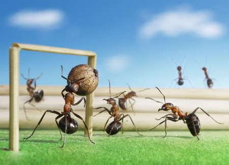 Micro Fußball - Ameisen spielen Fußball mit schwarzem Pfeffer Saatgut