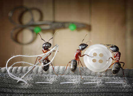 hormiga: adaptar la hormiga y el equipo de hormigas coser desgaste con aguja  Foto de archivo