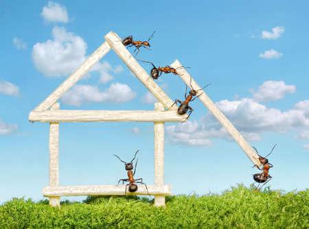 Team von Ameisen, die Konstruktion von Haus aus Holz mit Übereinstimmungen