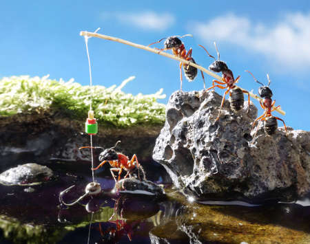 team of ants angling  with rod on sunny day Stock Photo