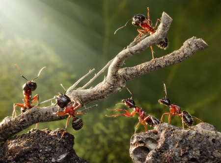 team of ants breaking down dead tree photo