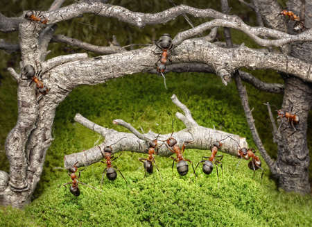 team of ants carries log in old rusty forest photo
