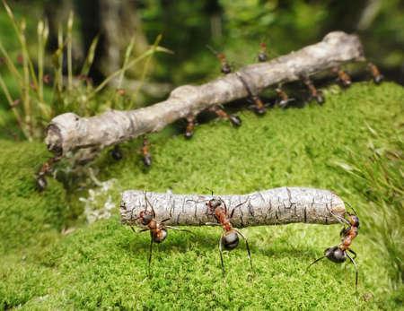 Team von Ameisen führt Protokolle im Wald