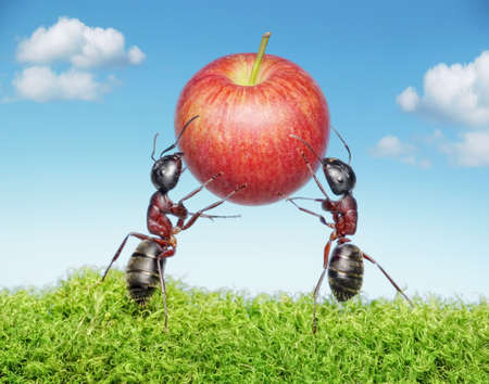ants: two ants holding red apple