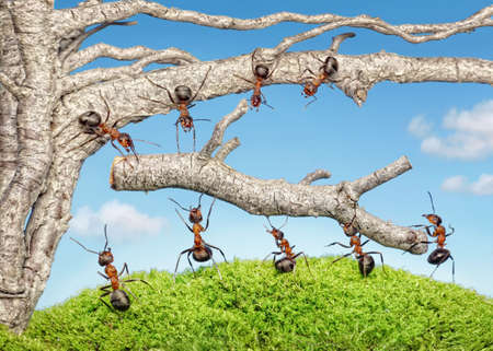 team of ants taking branch from old mighty tree Stok Fotoğraf