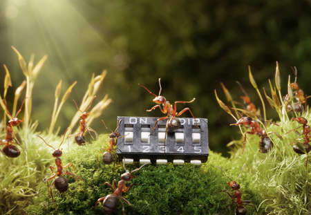 anthill:  piano concerto in anthill, ant and microchip, focused on maestro Stock Photo