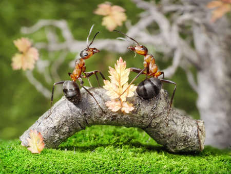 male and female of some ants have no wings, so this lovestory could occure