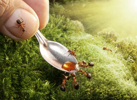 human kind: feeding ants with syrup Stock Photo