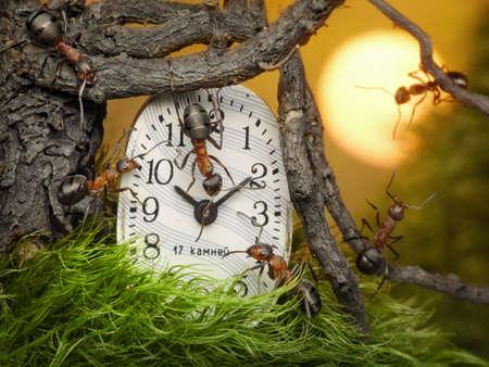 team of ants adjusting time on clock, fairytale