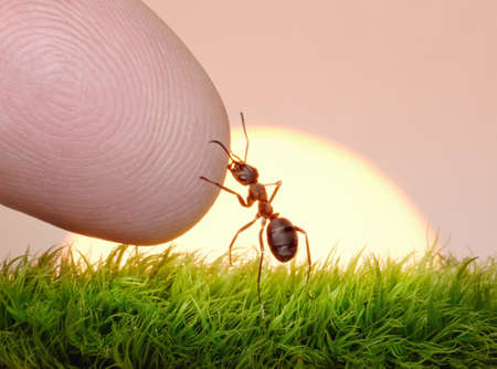 ant: human, nature and ant - finger of friendship on sunrise Stock Photo