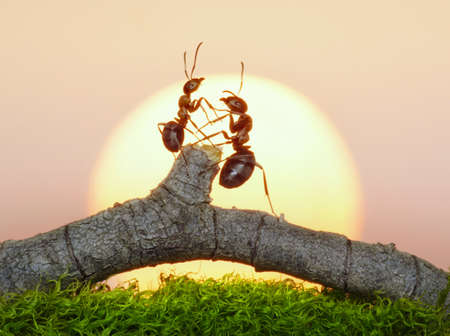 two ants on sunset or sunrise