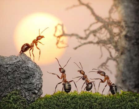 QUipe de fourmis, de Conseil, de fourmis préférez décision collective, bien que peut rendre seul Banque d'images - 8277375
