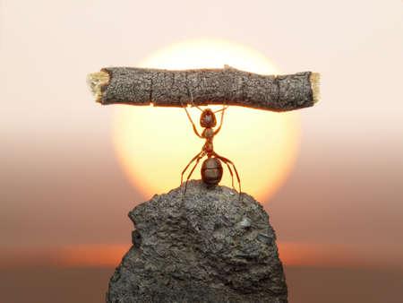 Estatua de trabajo, de las hormigas de civilización, viven 150 millones de años de trabajo