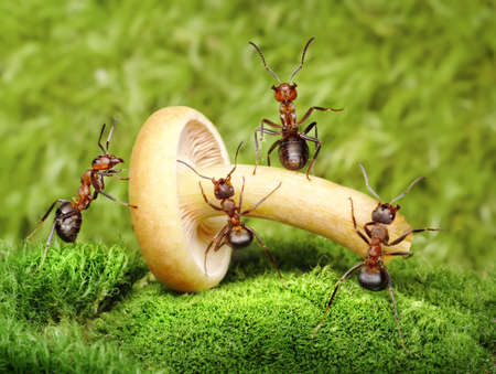 team of ants work mushrooming, teamwork photo