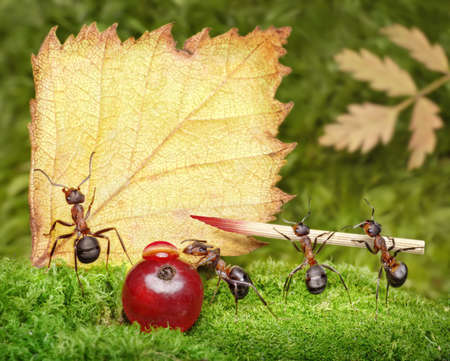 blank, team of ants writing postcard, place your text Stock Photo