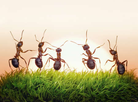 team of ants on sunrise,  concept of success Stock Photo