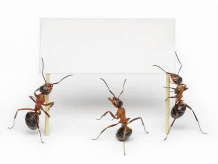 protest signs: team of ants hoding blank, placard or advertising billboard Stock Photo