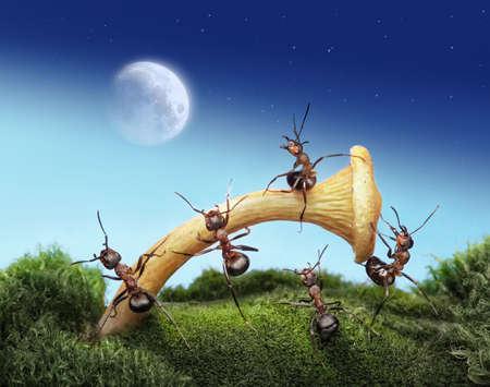 ameisenhaufen: Team der Ameisen startet Spaceman zum Mond, Teamwork, fantasy Lizenzfreie Bilder