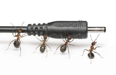 team of ants works with mobile phone plug connectior, teamwork Stock Photo