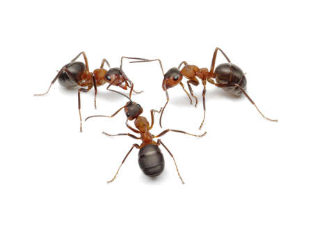 ants: ants create network, connecting with antennas Stock Photo
