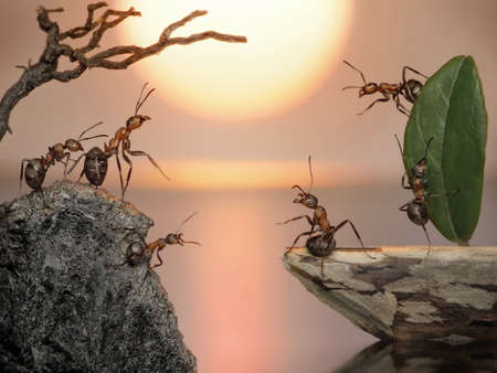 crew of ants sailing back home Stock Photo