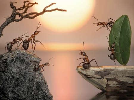 trabajo de equipo: tripulaci�n de hormigas navegando a casa