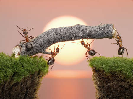 team of ants constructing bridge over water on sunrise or sunset
