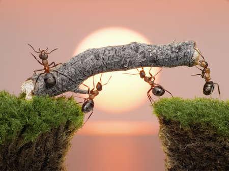 일출 또는 일몰에 물 위에 다리를 건설하는 개미의 팀