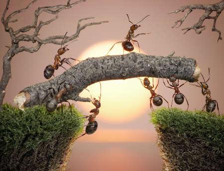 � teamwork: formiche gestito con il capo costruendo ponte sull'acqua