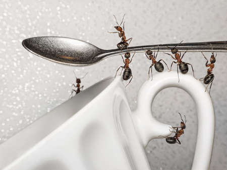 having a break, team of ants holding spoon over coffee cup