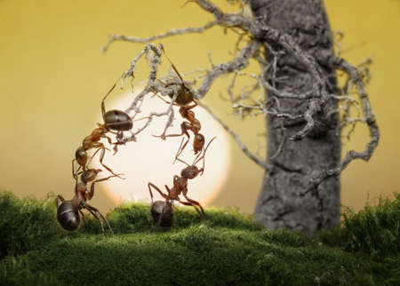 ants know to be lazy and play games, scientific fact Stok Fotoğraf