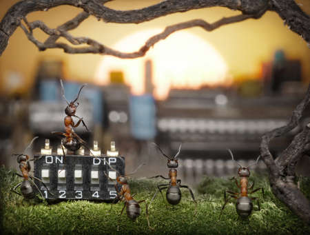 team of ants managing sunrise, teamwork, solar management, fantasy