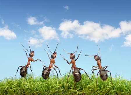 perfect work team concept, ants under summer blue sky Stock Photo