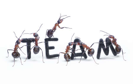 ants constructing word team with letters managing by chief, teamwork photo