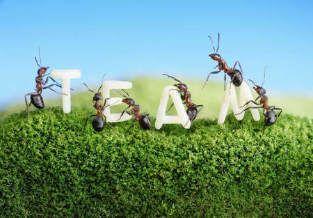 ants constructing word team with letters , teamwork concept