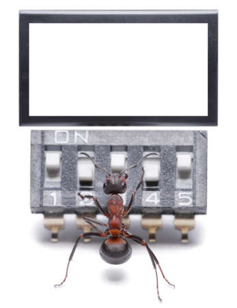 antrey: ant working with computer, blank,  isolated on white
