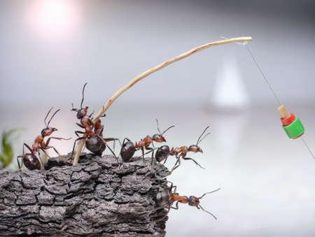 team of anglers, ants fishing at sea, teamwork