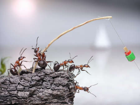 team of anglers, ants fishing at sea, teamwork