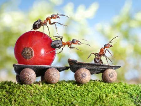Team der Ameisen liefert rote Johannisbeere mit Anhänger von Sonnenblumenkernen, teamwotk
